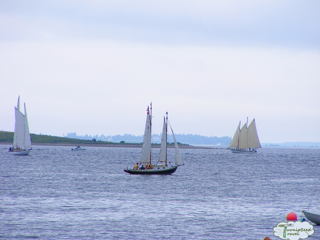 Sailing schooners in Mahone Bay