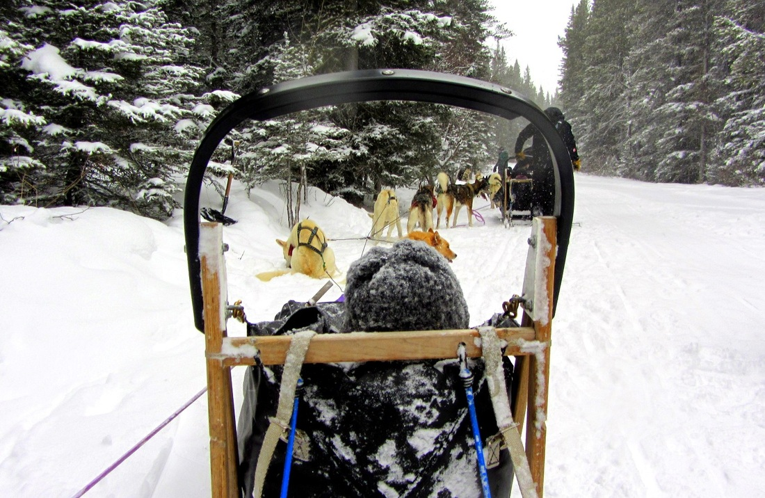 Snowy Owl Dog Sled Tours Canmore