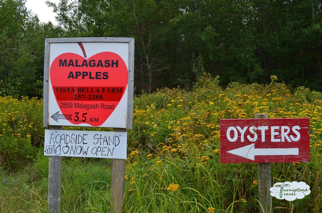 Malagash Apples at Vista Bella Farm Nova Scotia