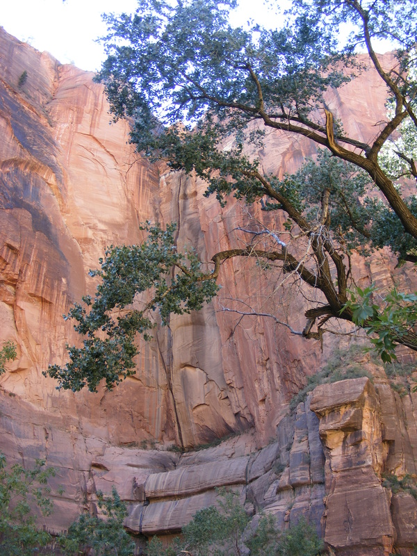 Zion National Park www.turnipseedtravel.com