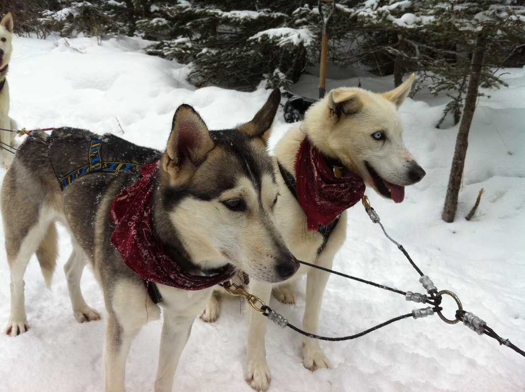 Dog sled experiences in Canada