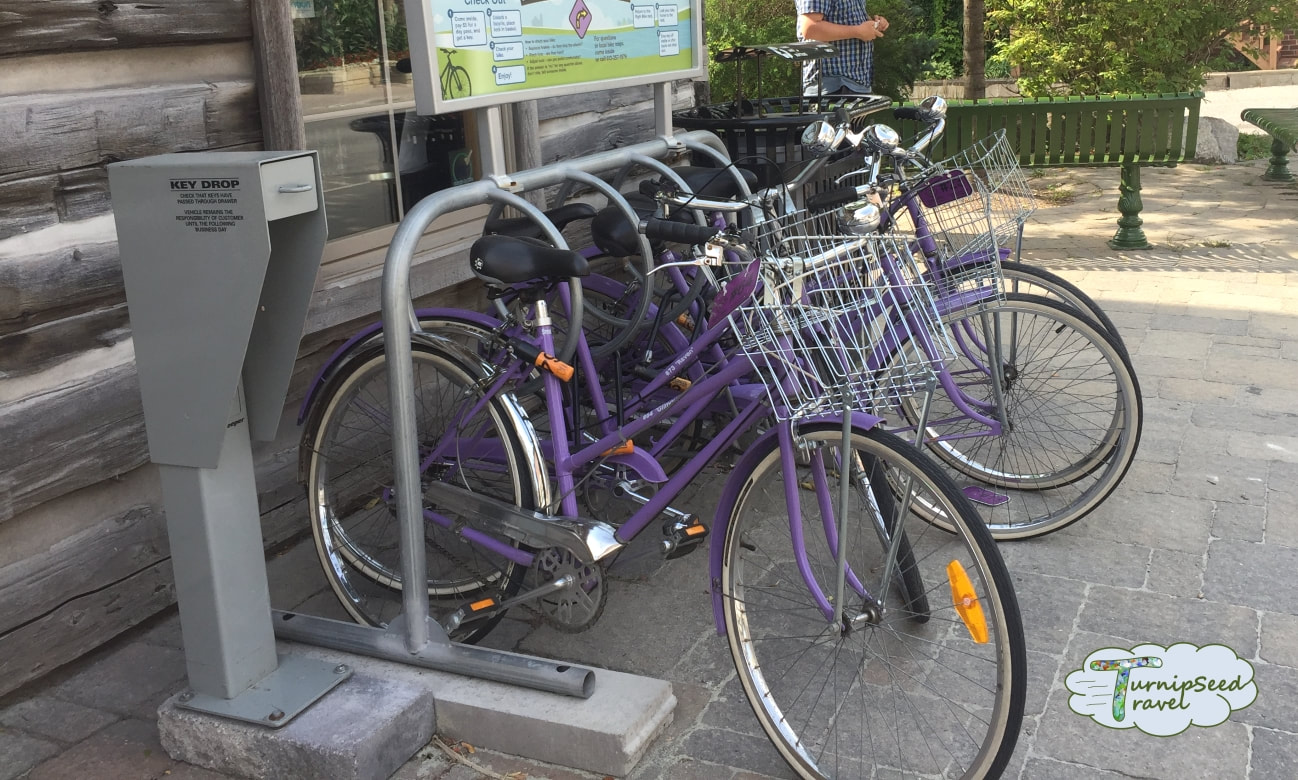 Purple bikes in the Carleton Place bike sharing program Picture