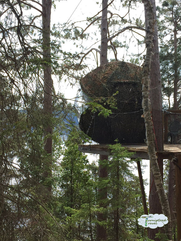 Tree house accommodations Saguenay Picture